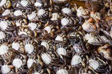 Free Salted Crab Stock Photos - 27259683