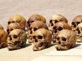 Free Skulls Stock Photo - 27262030