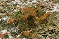 Free Mushroom Wood Stock Photography - 27265872