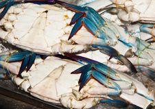 Free Sea Crab Royalty Free Stock Images - 27262709