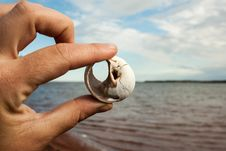 Free Hand Holding A Shell Stock Photography - 27268572