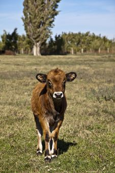Free Calf Stock Images - 27269544
