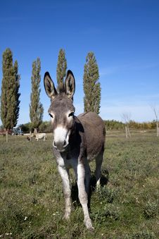 Free Donkey Royalty Free Stock Photos - 27269748