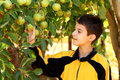 Free Boy In Apple Garden Royalty Free Stock Photography - 27271287