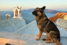 Free Santorini Street Dog Stock Images - 27272264