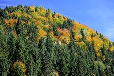 Free Autumn Forest Royalty Free Stock Image - 27276296