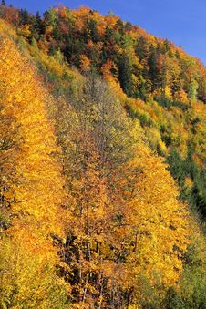 Free Autumn Forest Stock Photo - 27276630