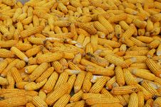 Free Corn Stock Photography - 27276632
