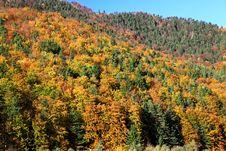 Free Autumn Forest Stock Photos - 27276733