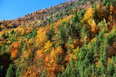 Free Autumn Forest Royalty Free Stock Images - 27276759