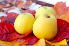 Ripe, Green Apples In The Garden, Autumn Time Royalty Free Stock Image