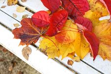 Free Beautiful, Bright Autumnal Leaves Royalty Free Stock Photography - 27277677