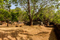 Free Gardens Of Sigiriya Lion&x27;s Rock Fortress Royalty Free Stock Image - 27281206