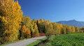 Free Autumn Trees Royalty Free Stock Photos - 27282958