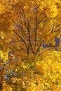 Free Autumn Trees Stock Photos - 27283763