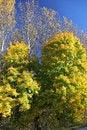 Free Autumn Trees Stock Photo - 27283840