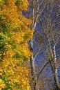 Free Autumn Trees Stock Photos - 27284193