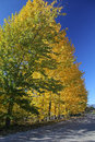 Free Autumn Trees Royalty Free Stock Image - 27284366