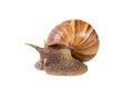 Free Snail Stock Photos - 27288763