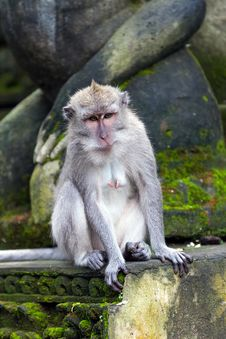 Free Monkey Sitting On Steps In Ubud Forest, Bali Stock Photo - 27281680