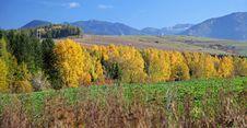 Free Autumn Trees Stock Photo - 27282910