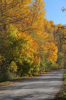 Free Autumn Trees Royalty Free Stock Images - 27283989