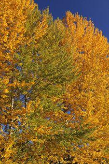 Free Autumn Trees Stock Photos - 27284583