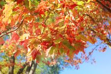 Free Autumn Leaves Royalty Free Stock Image - 27284976