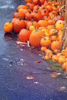 Free Autumn Pumpkins Stock Photo - 27284980