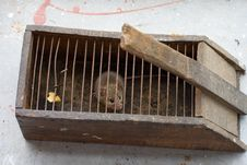 Free Mouse In A Mousetrap Royalty Free Stock Photos - 27286658