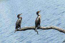Free Bird Buddies Royalty Free Stock Image - 27288346
