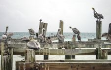 Free Seagulls On Old Dock Royalty Free Stock Image - 27288936