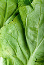 Free Green Vegetable Close Up Royalty Free Stock Photo - 27297135