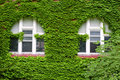Free Ivy Growing On Wall Royalty Free Stock Image - 2733026