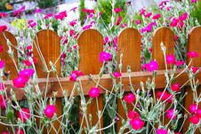 Flowered Hedge Stock Photography