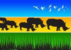 Free Rhino Stock Images - 2730794