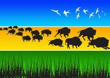 Free Buffalo Royalty Free Stock Photo - 2730895