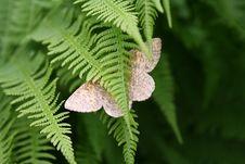 Free Butterfly In Fern Stock Photo - 2730980