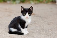 Free Stray Kitten Sitting Stock Photos - 2731473