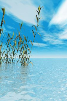 Free Water Plants Stock Image - 2732011