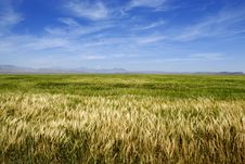 Free Field Of Grain Stock Images - 2733184