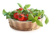 Tomatoes And Basil Stock Image