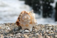 Free A Beautiful Giant Sea Shell Royalty Free Stock Photography - 2733267