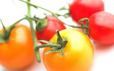 Free Mixed Tomatoes Royalty Free Stock Photo - 2733295