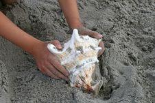 Free Beautiful Giant Sea Shell Stock Photography - 2733302