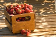Free Crate Of Wild Strawberries Stock Image - 2733421
