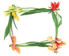Free Flower Frame-4 Royalty Free Stock Image - 2734656