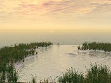 Free Water Grass Royalty Free Stock Photos - 2734798