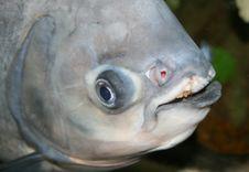 Free Fish Head Stock Photography - 2736362