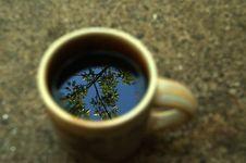 Free Tea Tree Royalty Free Stock Photo - 2736685